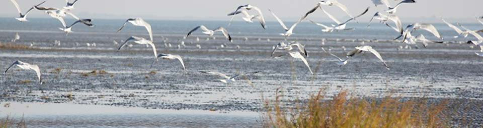 herz gewebe migration